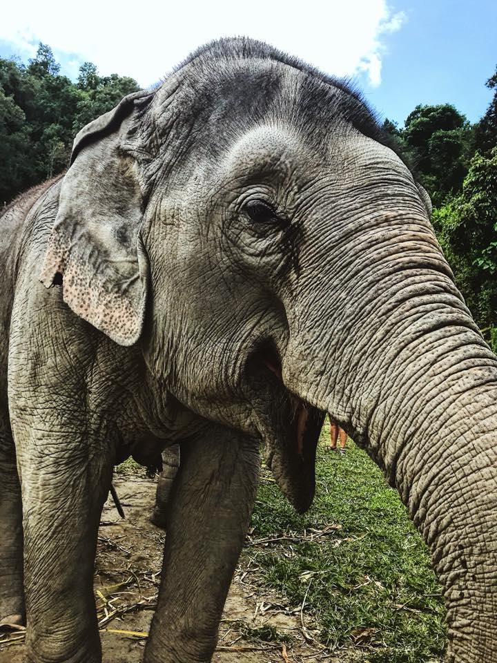 Elephant Jungle Sanctuary in Chiang Mai