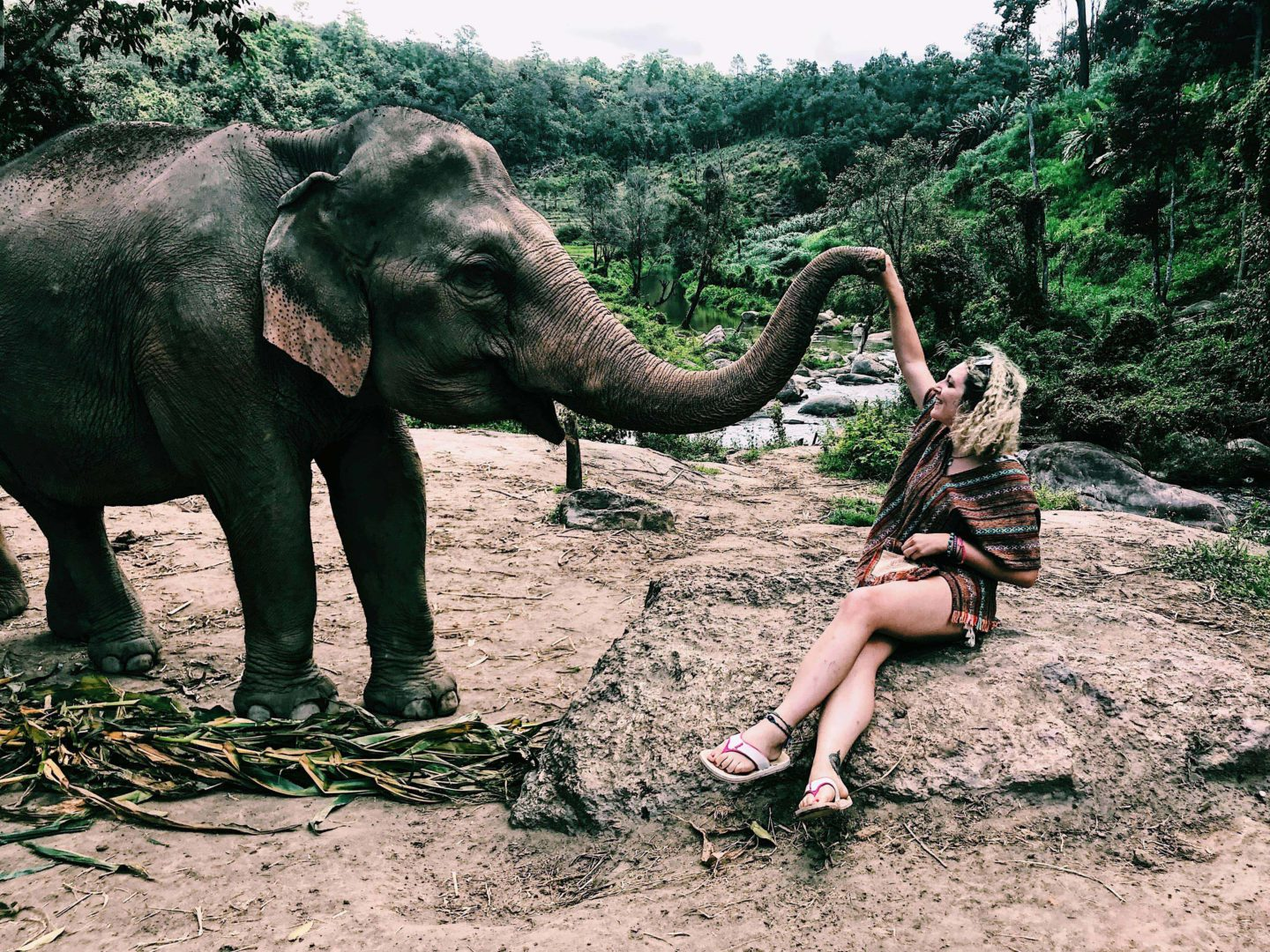 Is the Elephant Jungle Sanctuary in Chiang Mai ethical?