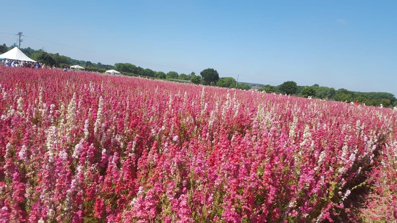 Real Confetti Flower Fields