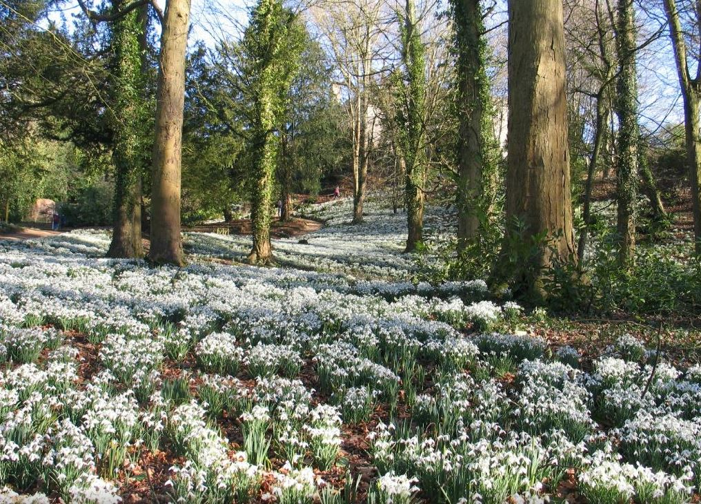 Flower fields: Snowdrops at Painswick Rococo Gardens. Image Source https://cotswoldfamilyholidays.com/snowdrops-in-the-cotswolds/