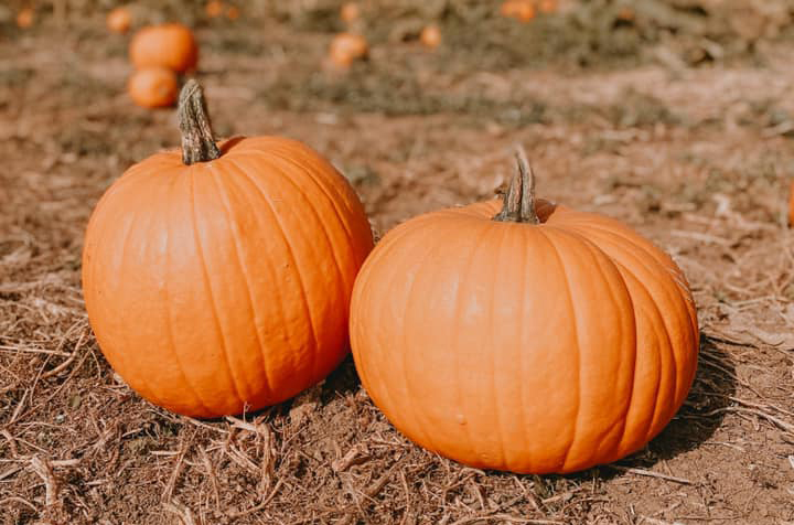 The Best Pumpkin Picking Fields near Bristol, UK